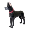 4D Master - Объемный пазл Собака Немецкий дог (26487)