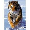 Пазл Trefl - Тигр на снегу. 500 pcs (37009)