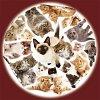 Пазлы Trefl круглые - Котята. 300 pcs (39042)
