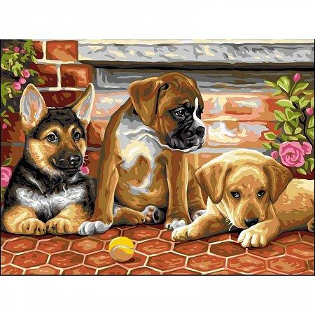 Картина по номерам Три щенка и мячик 30x40см, Babylon VK111
