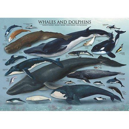 Пазл Eurographics Киты и дельфины, 1000 элементов (6000-0082)