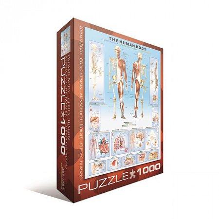 Пазл Eurographics Тело человека, 1000 элементов (6000-1000)