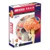 4D Master - Объемная анатомическая модель Мозг человека (26056)