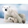 Пазл Eurographics Белая медведица с медвежонком, 1000 элементов (6000-1198)