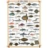 Пазл Eurographics Морские рыбы, 1000 элементов (6000-0313)
