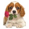 Пазл Eurographics Песик с розой, 100 элементов (8104-0617)