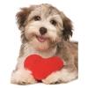 Пазл Eurographics Песик с сердцем, 100 элементов (8104-0615)