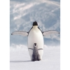 Пазл Eurographics Пингвин с пингвиненком, 1000 элементов (6000-1246)