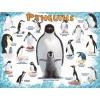 Пазл Eurographics Пингвины, 100 элементов (8100-0044)