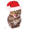 Пазл Eurographics Праздничный котенок, 100 элементов (8104-0671)