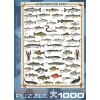 Пазл Eurographics Пресноводные рыбы, 1000 элементов (6000-0312)