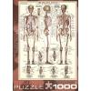 Пазл Eurographics Скелет человека, 1000 элементов (6000-3970)
