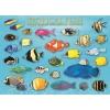 Пазл Eurographics Тропические рыбы, 1000 элементов (6000-1173)