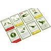 Изображение 3 - Настольная игра Эволюция, на русском. Правильные игры (13-01-01)