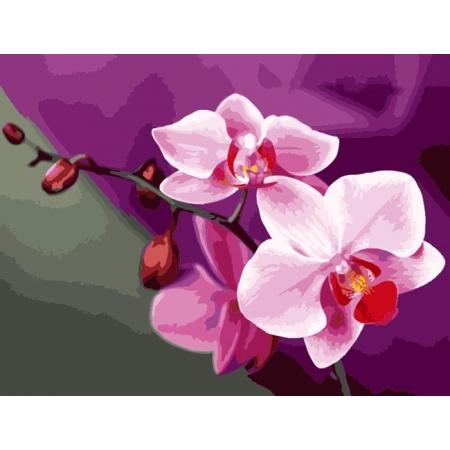 Рисование по номерам. Картина серии Цветы 40х50см, Розовые орхидеи, Идейка (MG1081)