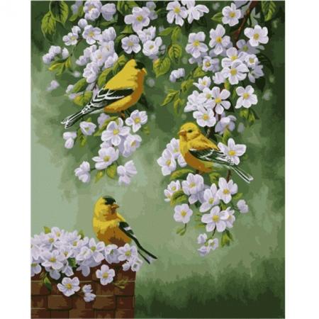 Зяблики на яблоне, серия Животные и птицы, рисование по номерам, 40 х 50 см, Идейка, Зяблики на яблоне (KH2427)